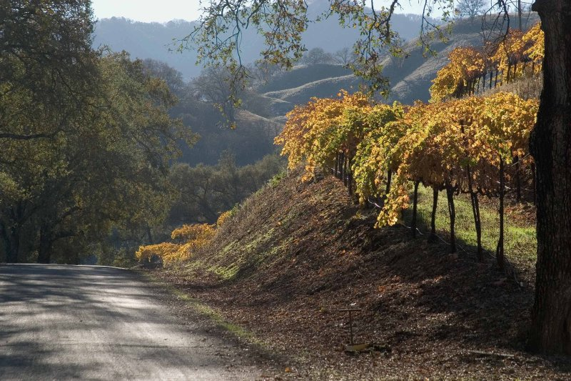 Autumn in the Vineyards No. 2