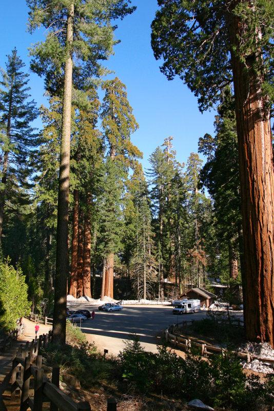Sequoia Aera Park