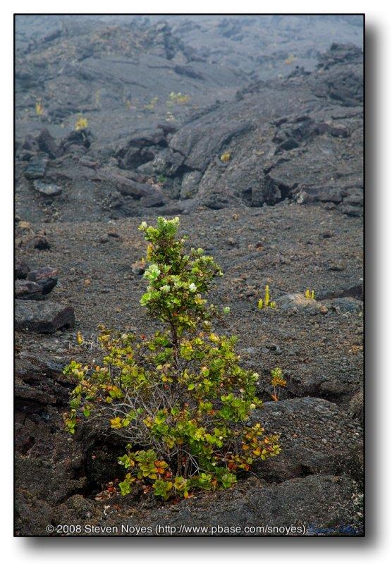 The Return : Kilauea : Hawaii