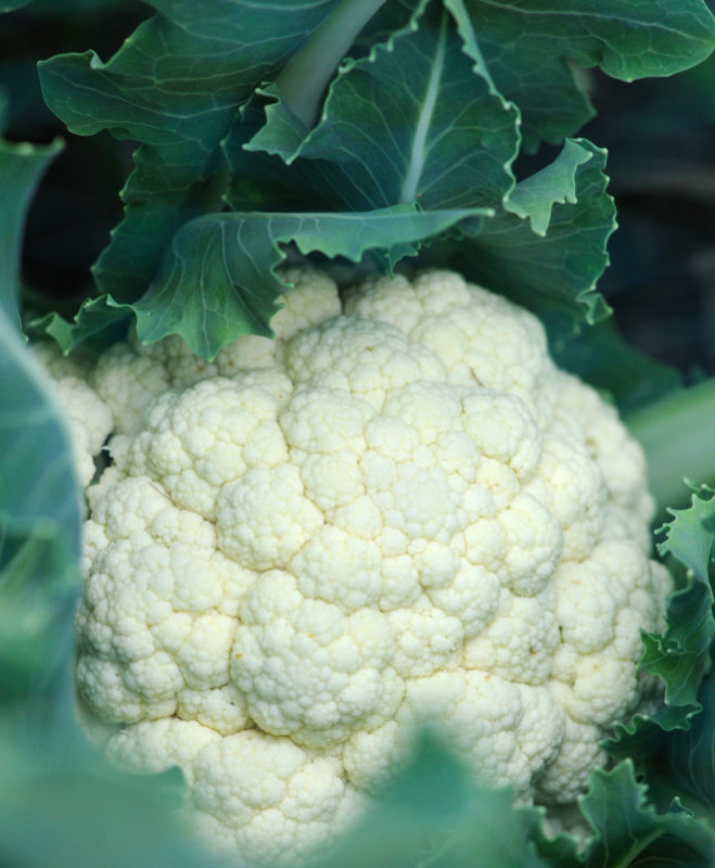 0053 - Cauliflower.jpg