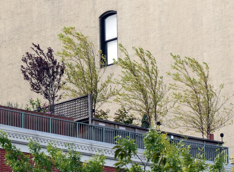 Autumn Breezes on a Penthouse Garden