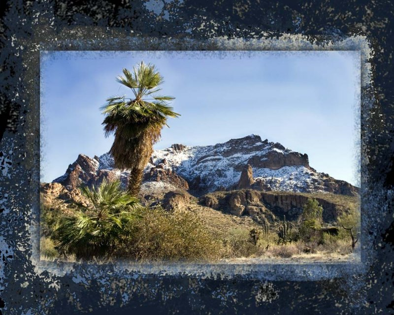 Palm with snowy mountain
