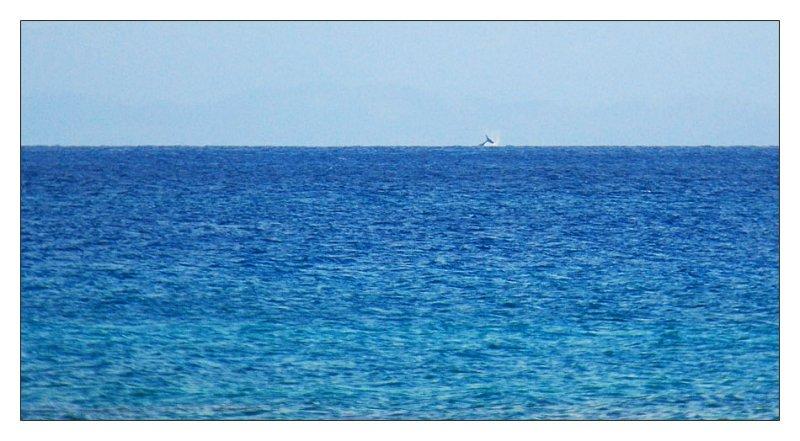 DSC_0751_whale.jpg