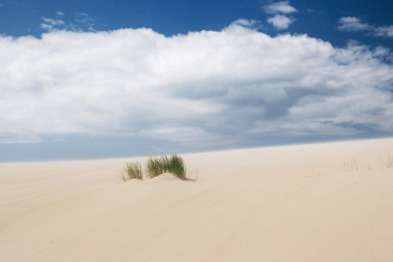 Lithuania, Curonian Spit, dunes near Nida