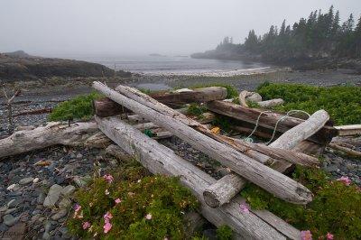 Hamilton Cove Preserve- the discarded