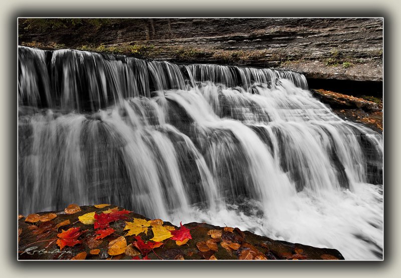Fallen Leaves By Waterfall