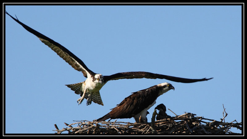 Male taking off