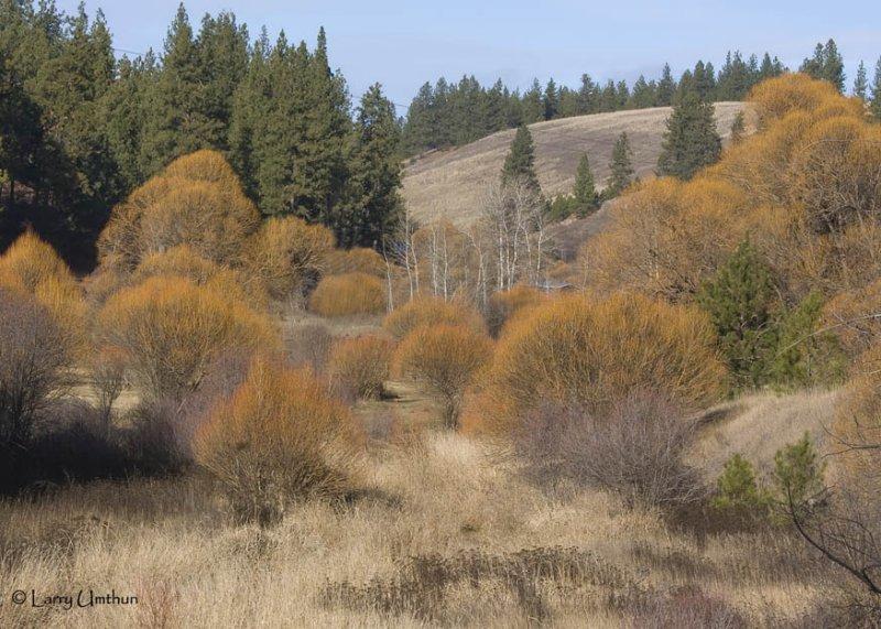 Deep Creek  Spokane,WA