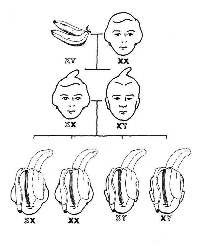 X-Y_Bananas