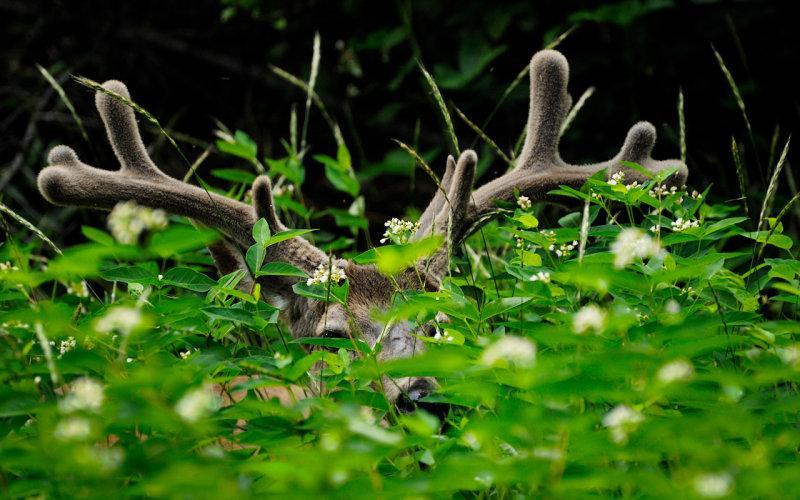 Deer on Mirror Lake Trail
