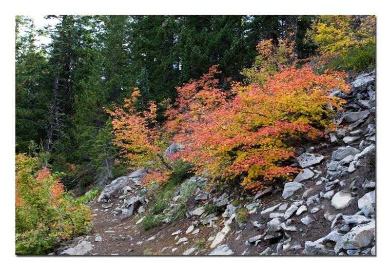 Mirror Lake Trail 1