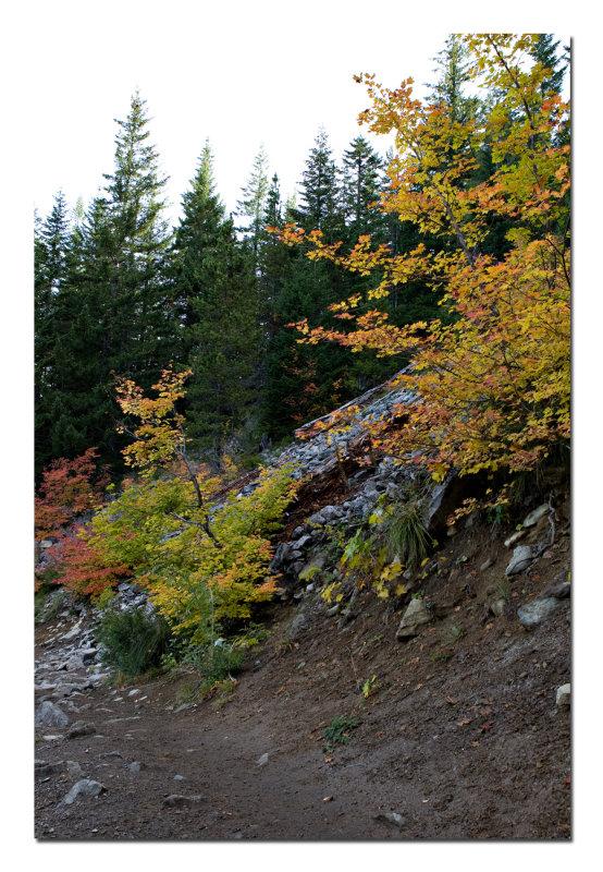 Mirror Lake Trail 2