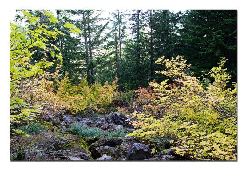 Mirror Lake Trail 3