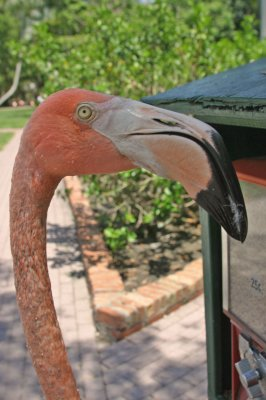 Hungry flamingo that pecked my arm