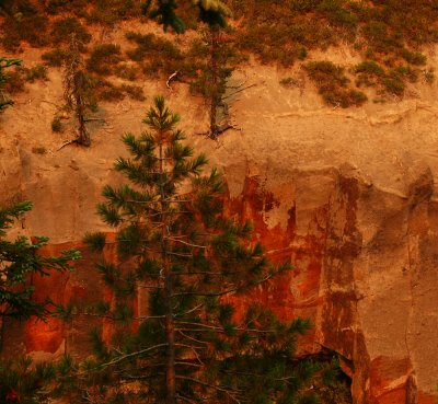Tapestry at Annie's Creek, Crater Lake National Park, Oregon, 2008