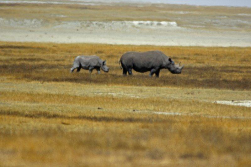 Rhino adult and baby.jpg