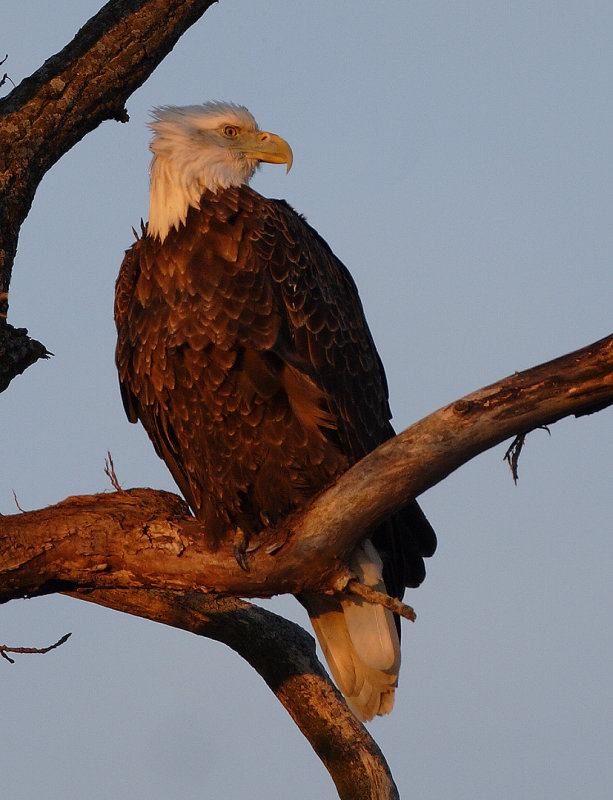 Eagles and assorted1.jpg