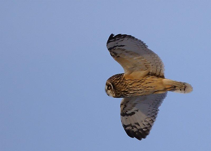 se-owl-flight4.jpg