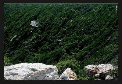 Green Stream Lines