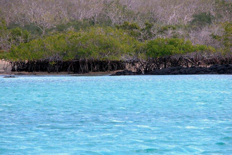 Mangroves and Palo Santo