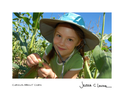 curious about corn