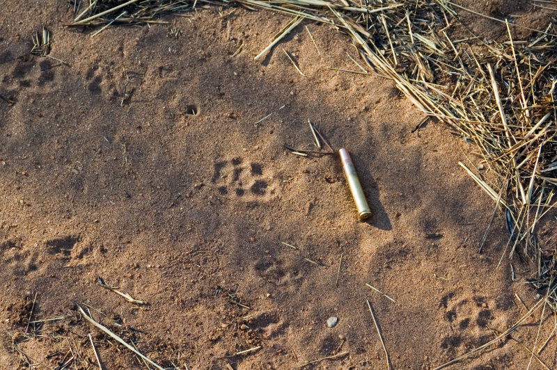 Civet Track