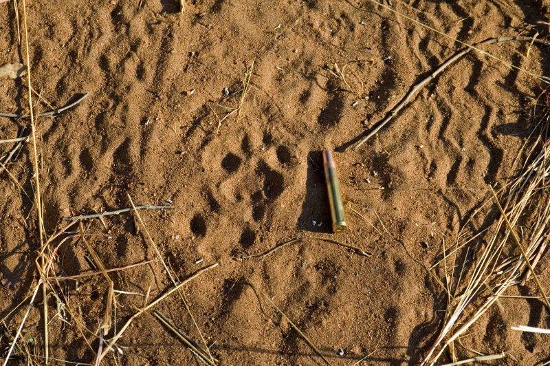 Leopard Tracks (Female)
