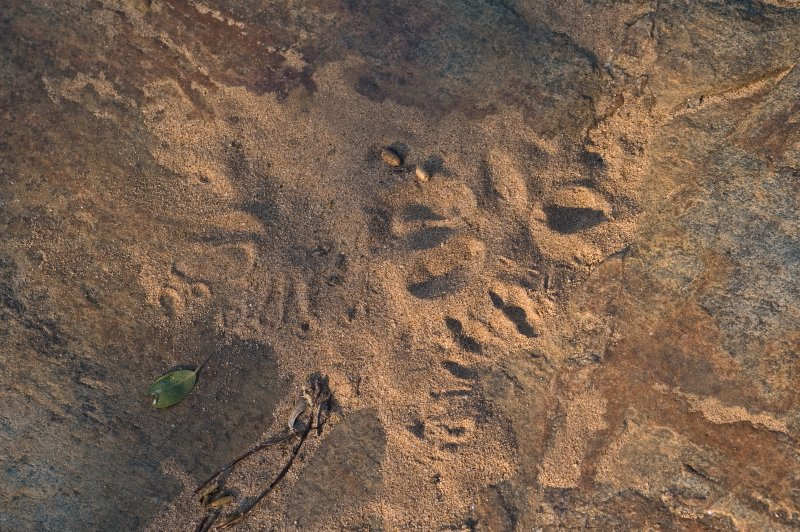 Tracks at the Water Hole