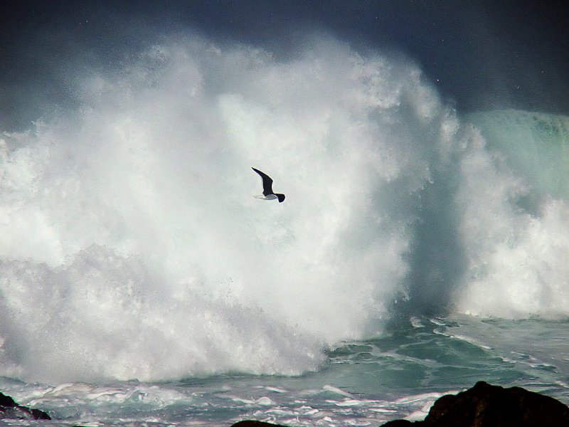 ex seagull huge wave mod.jpg