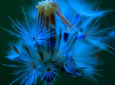 some fairies are blue