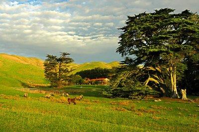 Farm in Ohariu valley