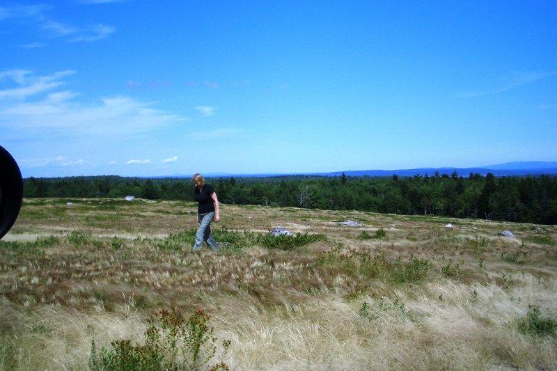 Blueberry field in Maine