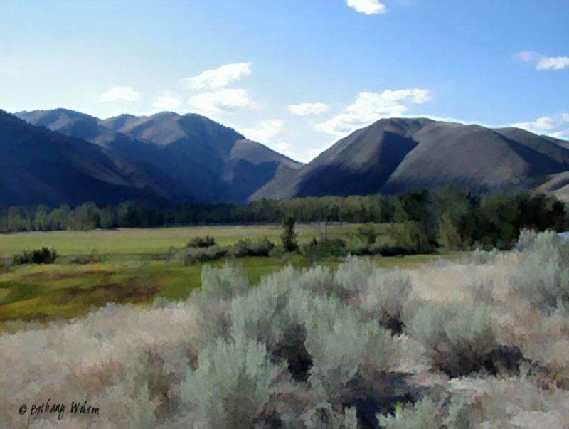 Idaho sagebrush