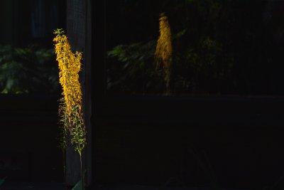 Reflective Yellow Weed