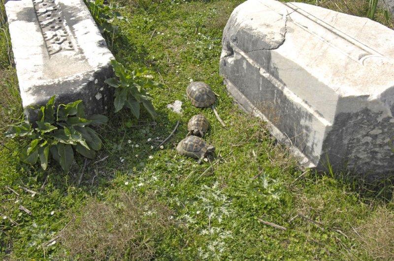 Miletus 2007 4506.jpg