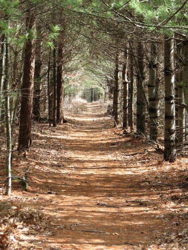 Forest Path.jpg