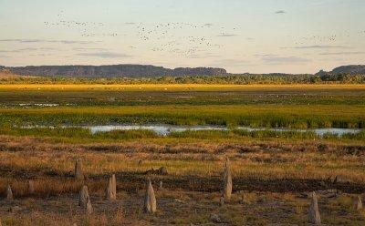 Hawk Dreaming - billabong wildlife