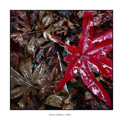 061119 Cover Leaf