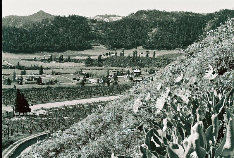 Hillside Blooming Over Wenatchee River Valley