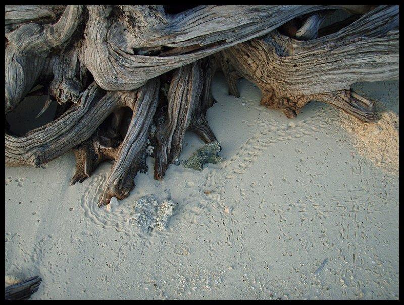 Baby turtle tracks