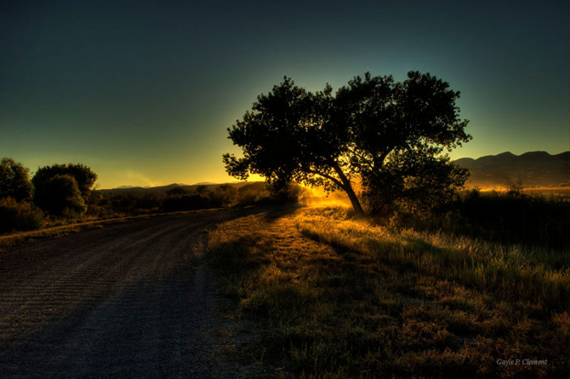 Cottonwood in the Setting Sun