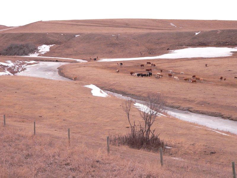 Ranch Little Bow.jpg