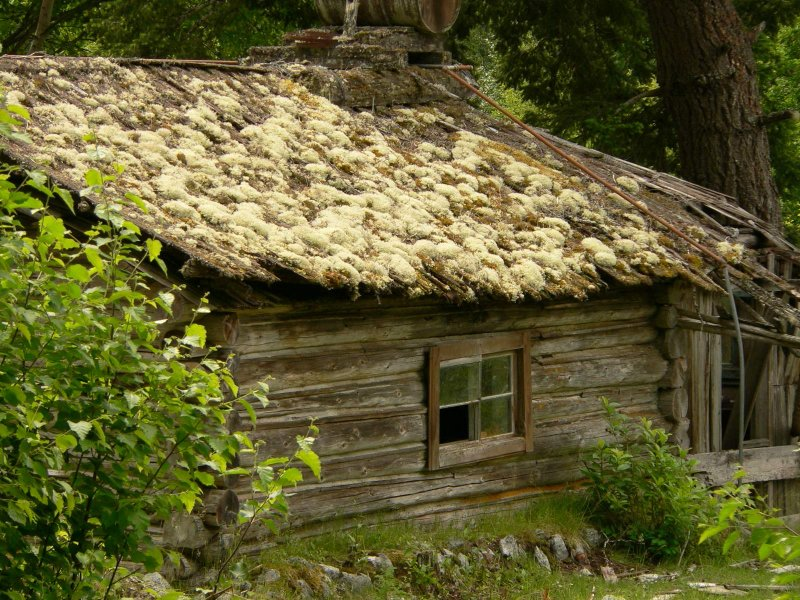 Moss covered cabin.jpg