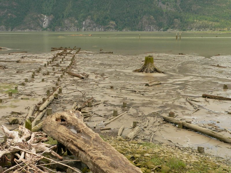mudflats 2.jpg