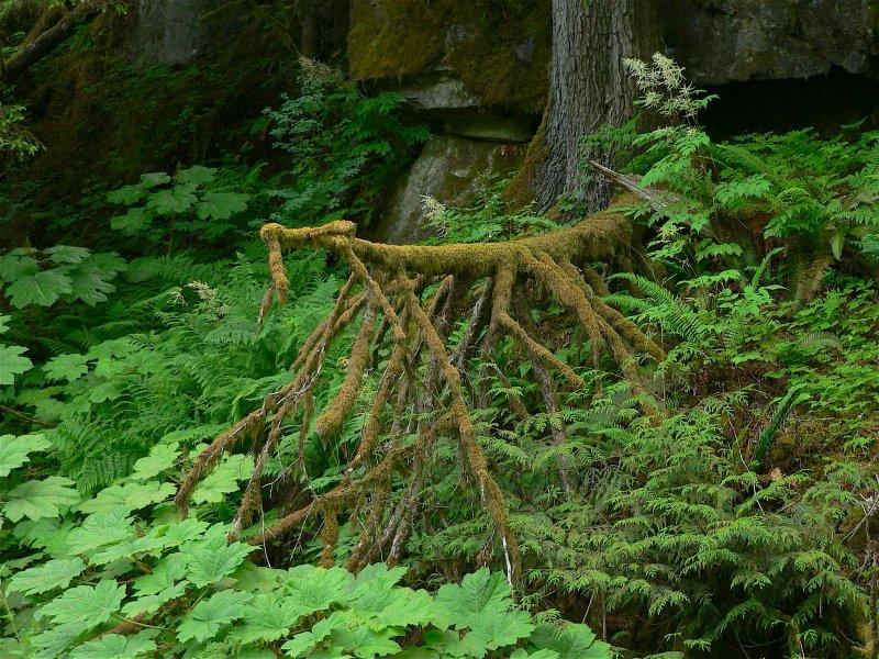 Moss spider.jpg