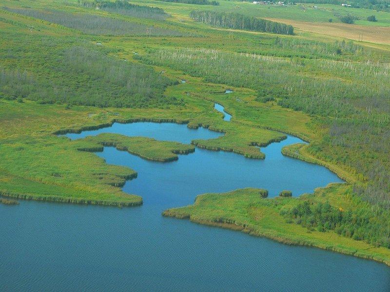 Wetlands on Johnnys Lake