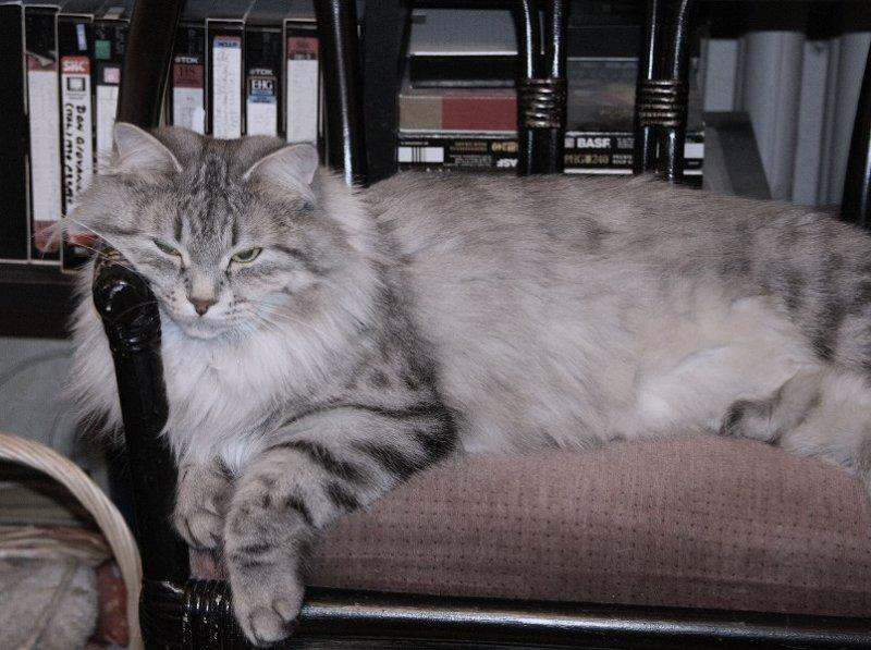 Izzi osaa rentoutua! Kuva marraskuulta 2006