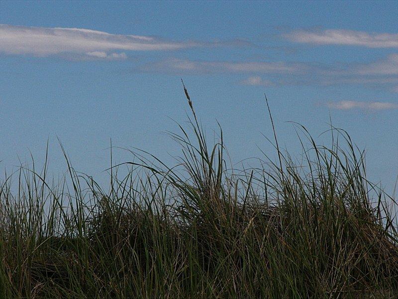 Grass Meets Sky ~ August 30th