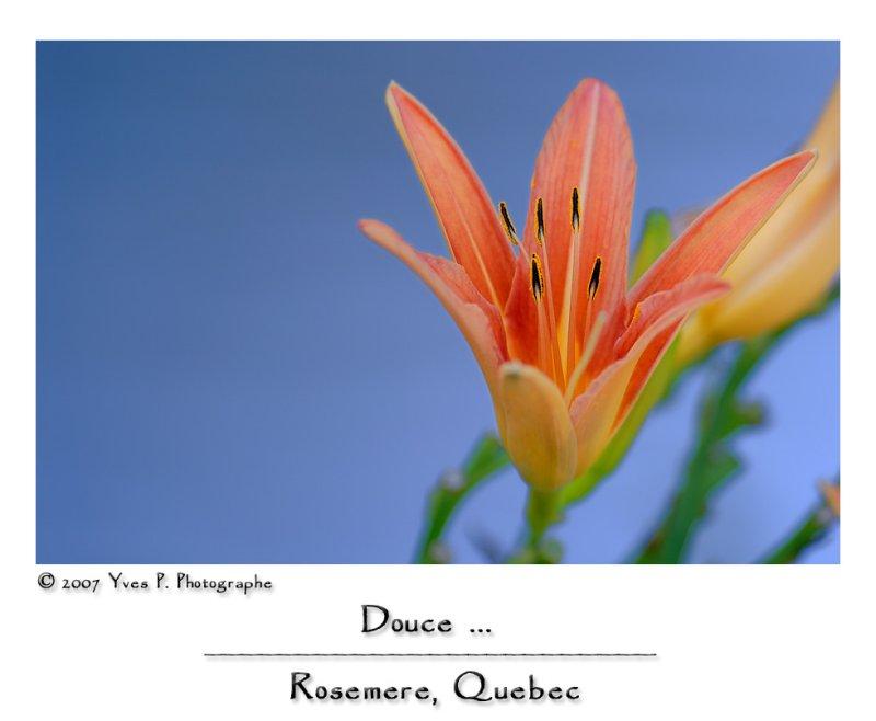Une Fleur pour Toi ...