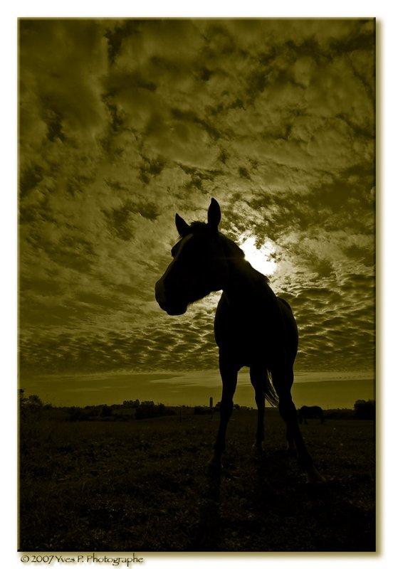 Backlit Horse ...